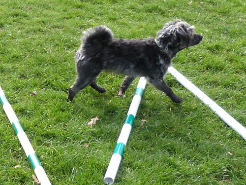 canine conditioning course deposit
