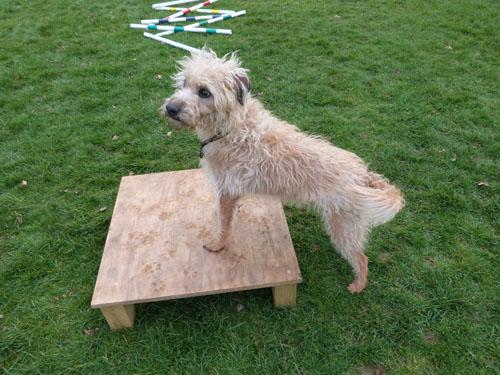 Foundation level canine conditioning
